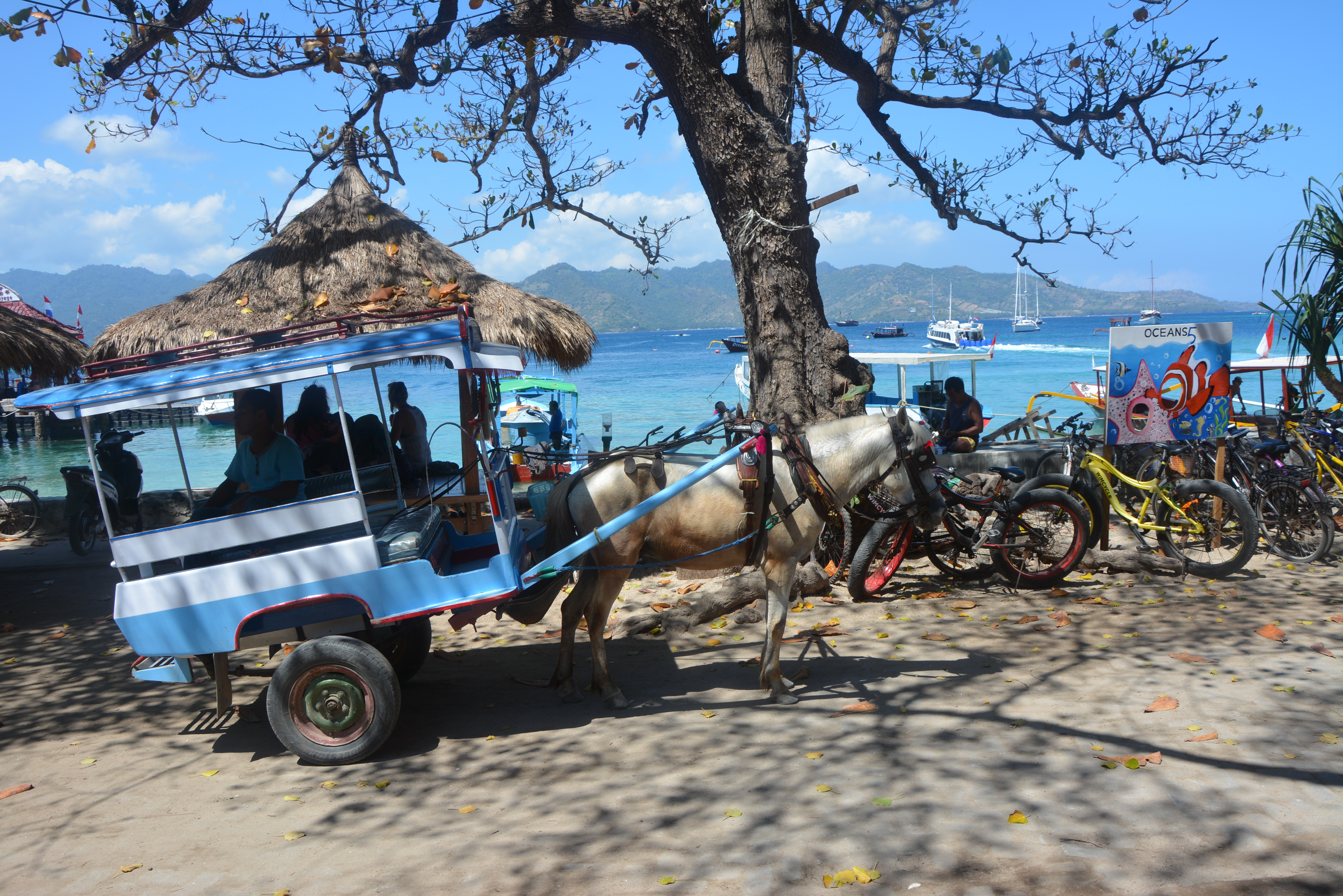 Gili air horses abused