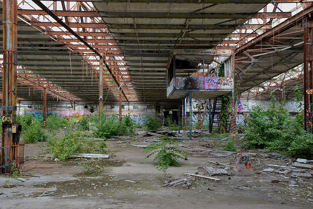 abandoned cable factory main hall plants